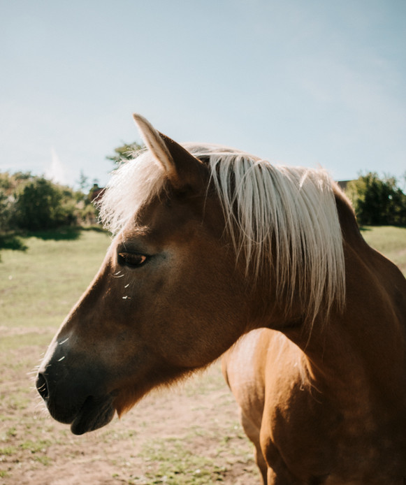 Horse portrait 4.jpg