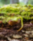 seedling-2240441_1280.jpg