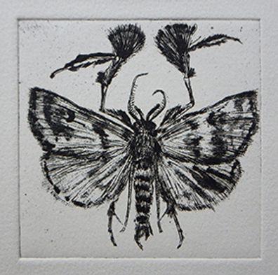 moth etching marie-noelle van berkel-cha