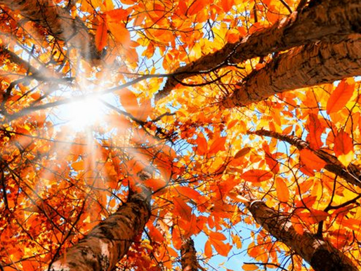 September Newsletter: Fall for Compassion