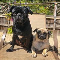 Rocky & Rosie.jpg