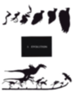 sreece_ornithology for artists_section 2