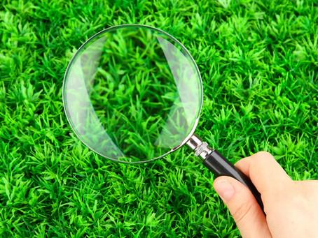Porque a grama do vizinho é sempre mais verde
