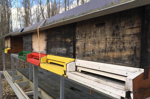 Im Bienenstock ist schon Bewegung. Die Bienen erledigen gerade ihre Entleerungsflüge (Anfang März).