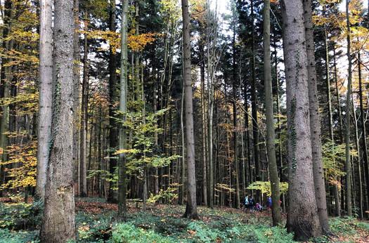 Typischer Mischwald