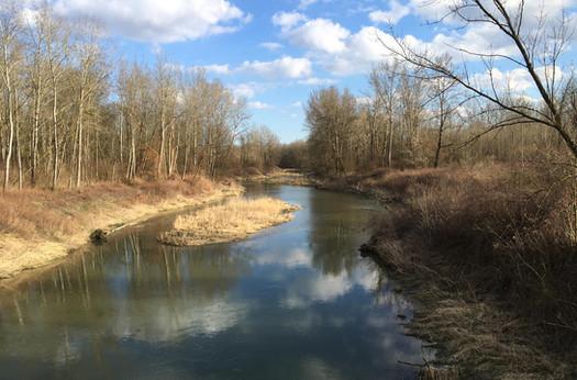 Ein Nebenarm der Donau läßt erahnen, wie das Ufer der Donau vor der Regulierung ausgesehen haben mag.