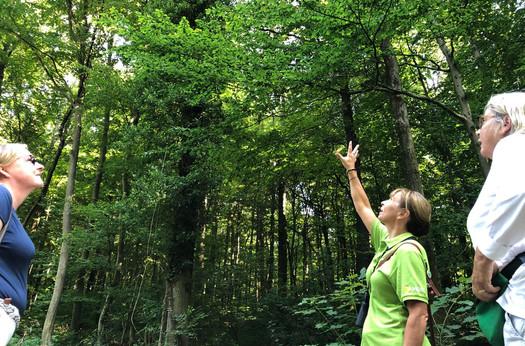 Efeu, nützlich und harmlos für Bäume