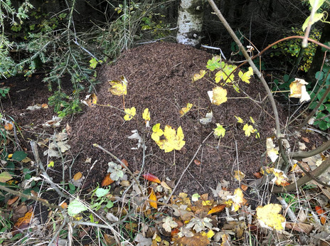 11 Ameisenhaufen.jpg