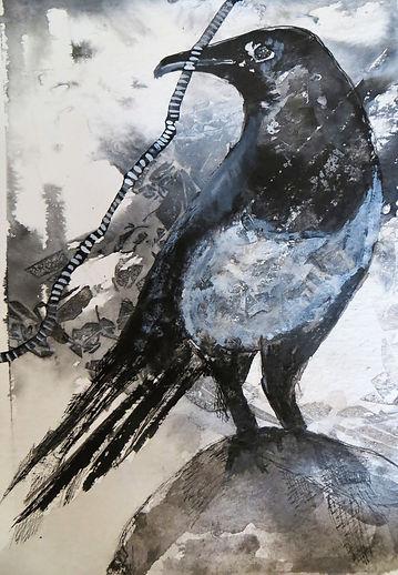 crow4.JPG