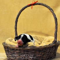 puppy nr 1