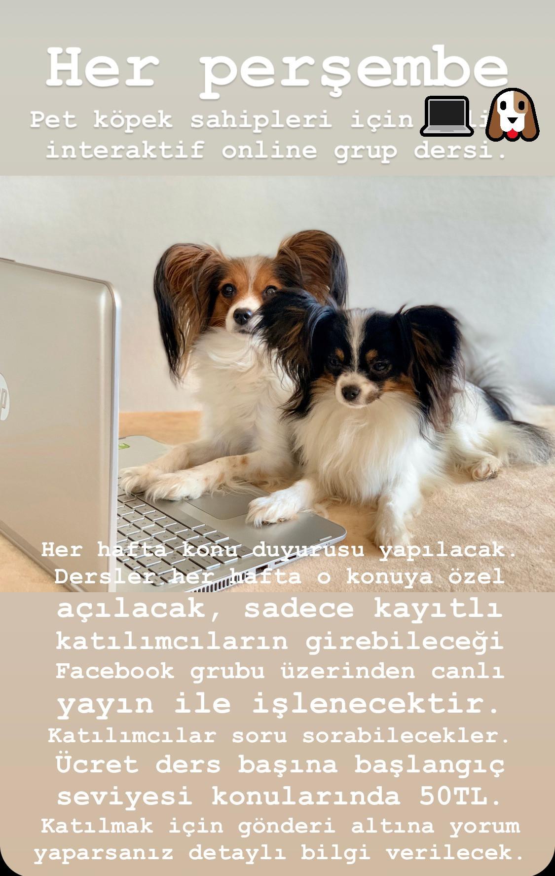 Online Grup Dersi