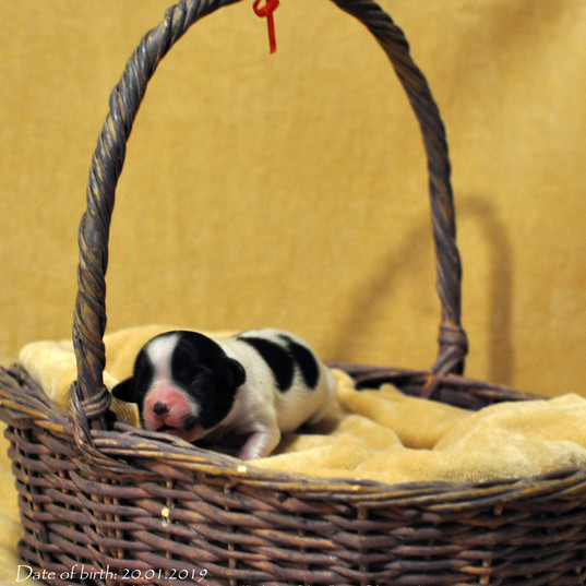 puppy nr 3