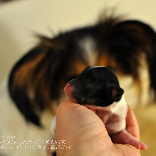 puppy nr4