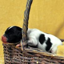 puppy nr 2