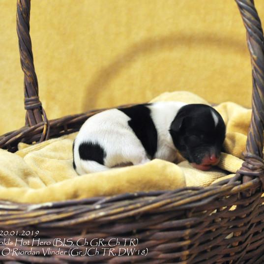 puppy nr 4
