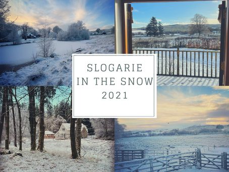 Greetings from a Snowy Slogarie