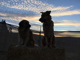 chien coucher soleil.jpg