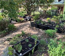 Misty Ridge wicking beds2.jpg