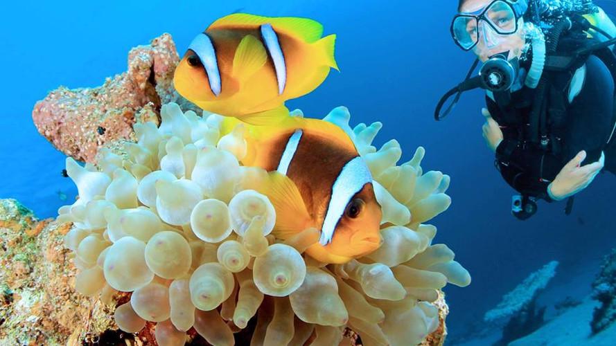 Den optimalen Durchblick unter Wasser