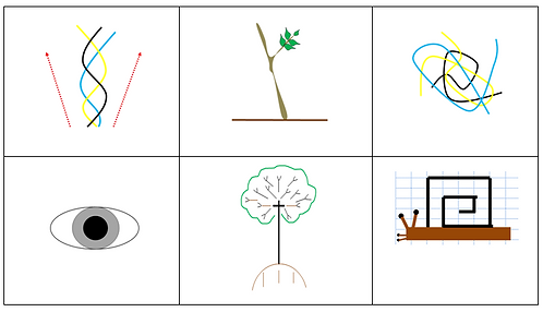 7 Charts: Numbers 1, 2, 3, Vo, Tree and Snail