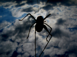 Black insect in the sky