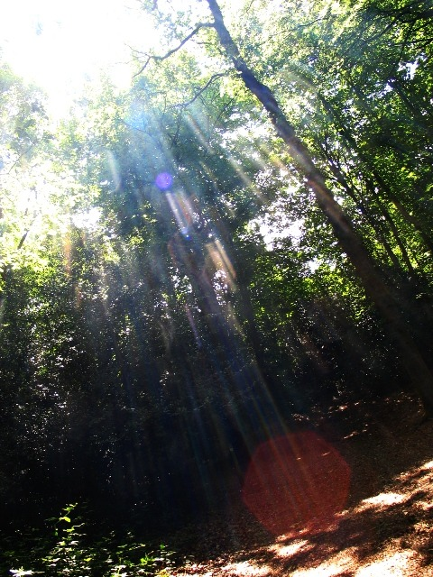 PHOTO 5 - SUNLIGHT COMING THROUGH TREES.