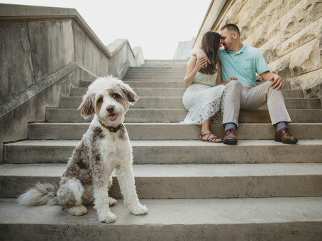 Just bring your dog:  Weddings & Engagements