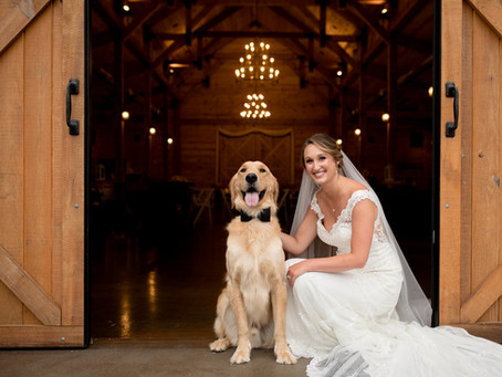 Weddings and Engagements with Dogs!