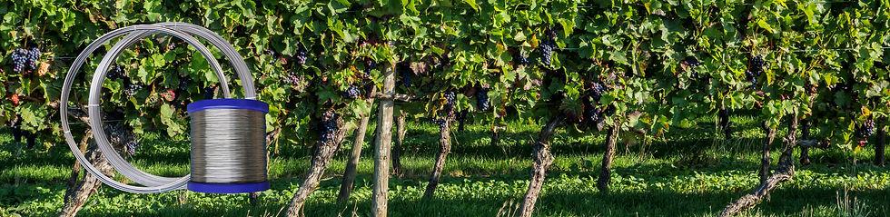 Spalierdraht für Weinberge und Obstbau