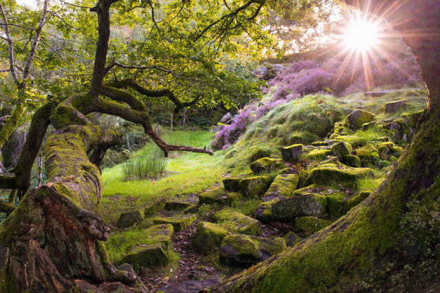 Exploring an enchanted forest