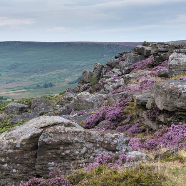 Carhead Rocks heather