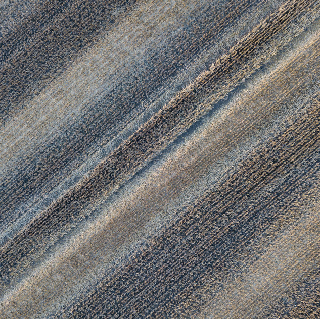Abstract field shot
