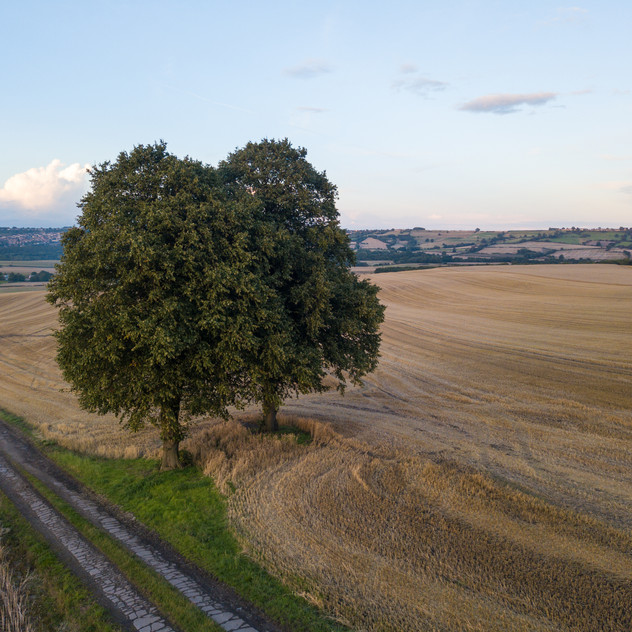 Drone shot of two trees