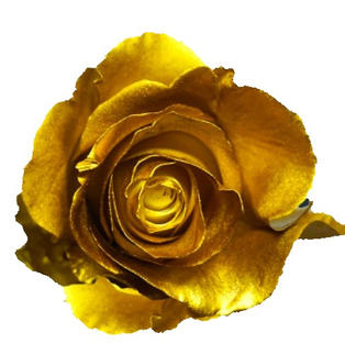 Rose Sprayed Gold