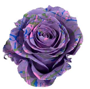 Rose Lavander Painted