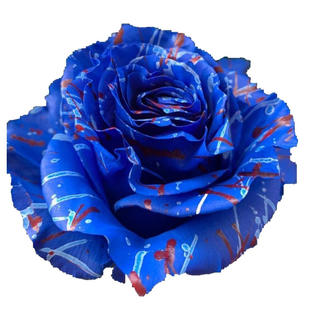 Rose Tinted Blue Painted