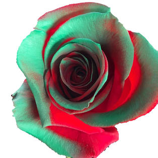Rose Tinted Green Red