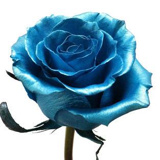 Rose Sprayed Metallic Blue
