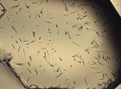 Digital micrograph of fission tracks in a Harcourt Granodiorite apatite specimen