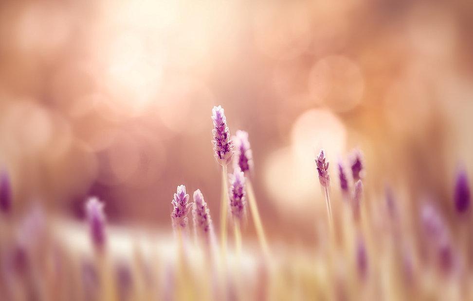 cvety-priroda-cvetochki-trava.jpg