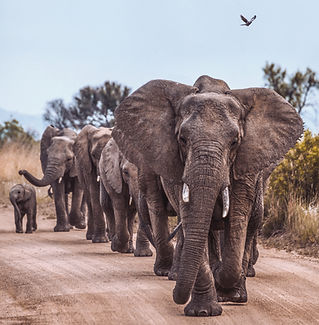 Elephants%20in%20an%20African%20game%20r