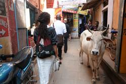 Donisha walking beside cow.jpg