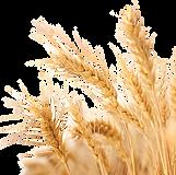 Farm plan logo.png