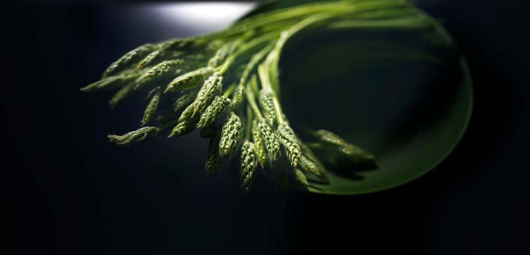 Still-life photography Asparagus Green