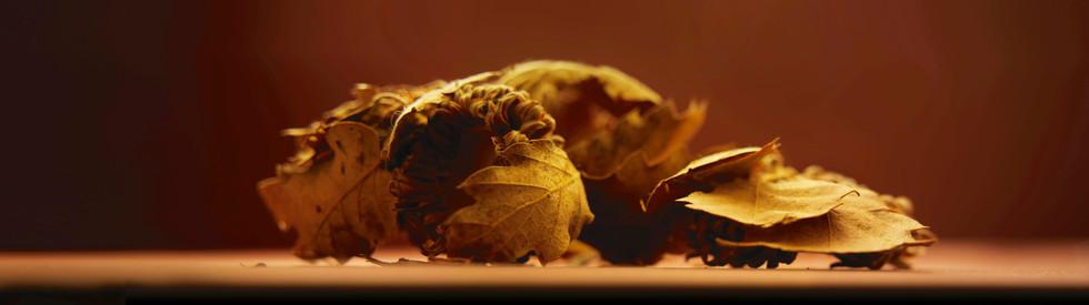 Still-life photography Oak tree leaves golden
