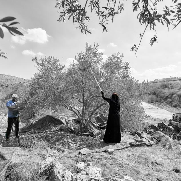 Journeys West Bank land-8.jpg