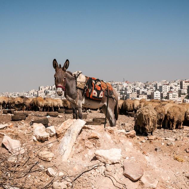Amman-3.jpg