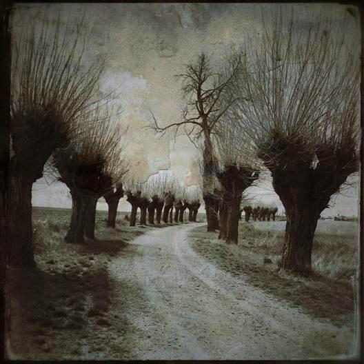 paisaje-Boadilla-I.jpg