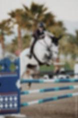 animal-blur-competition-1554032.jpg