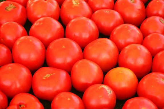 tomatoes-PU3NQMX.JPG